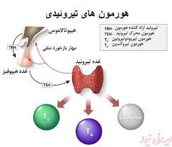 پاورپوینت هورمون های تیروئیدی (ویژه ارائه کلاسی درس بیوشیمی)